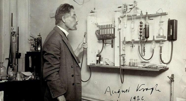 August Krogh, 1926.
