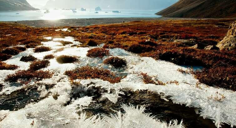 Arktisk hedeland