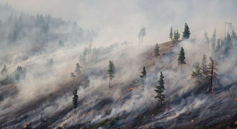 Foto af træer, der brænder pga. klimaforandringer