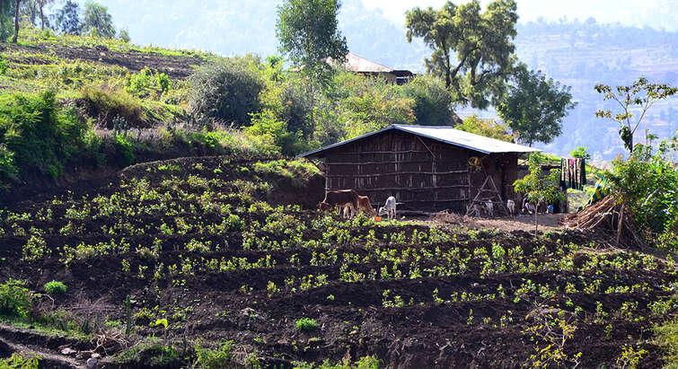 Photo: Charlotte Floors/NLRC. Ethiopia, 2013.