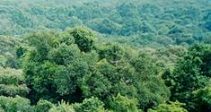 Skov i Kenya. Foto: Zanaq