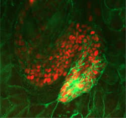 A grant of 6 million euros for the HumEn project brings together leading European stem cell-research groups and industrial partners