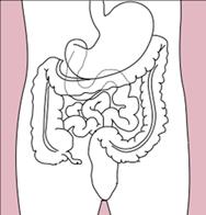 Human intestines