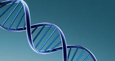 Generne kan have betydning for virkningen af morfin.