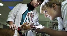Dyrelæger undersøger en hund.