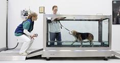 En hund bliver genoptrænet på vandløbebånd på dyrehospitalet.