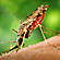 Read more about: The malaria mosquito is disappearing - but it is not just good news