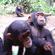 Læs mere om: KU-studerende forsker i zoo
