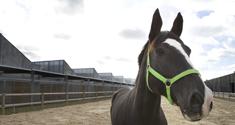 Hest på Hospital for Store Husdyr