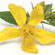 Læs mere om: Ny metode aflæser kemisk aktivitet i planter