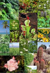 Udpluk af planter. Foto: Wikimedia Commons