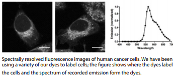 fluorescence images of human cancer cells