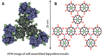 AFM image of self-assembled bipyridine-insulin
