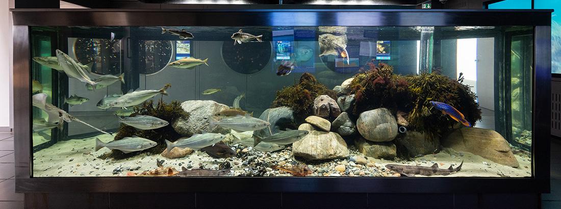 Rundvisning på akvariet